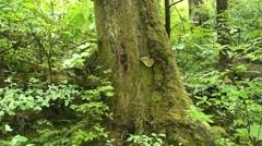 Temperate rain forest, mushroom Stock Footage
