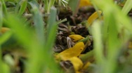 Stock Video Footage of Ant Road Close Up 2