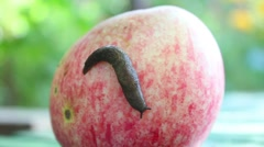 Snail on apple Stock Footage