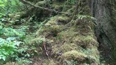 Temperate rain forest, mushrooms Stock Footage