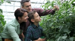 Family in greenhouse Stock Footage