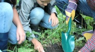 Family planting sprout out Stock Footage