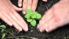 Planting sprout out Stock Footage
