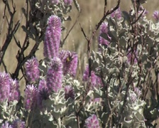 Wasp on flower- Pilbara- Australia Stock Footage