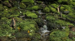 Mossy stream. Two shots. Stock Footage