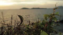 Leaves in the Breeze with Islands in the Background Stock Footage
