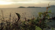 Stock Video Footage of Leaves in the Breeze with Islands in the Background