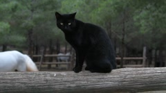 Stock Video Footage of Black cat sitting on a timber.