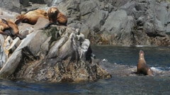Boat Tour Sea Lions - stock footage