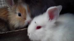 Beautiful Rabbits Stock Footage