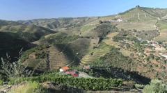 Port vineyards in Portugal Stock Footage