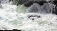 Jumping Steelhead (Rainbow) Trout Stock Footage