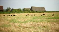 Outskirts of the village landscape Stock Footage