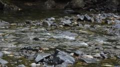 Salmon Motors Upstream Stock Footage