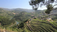 Vineyards above the Douro Stock Footage
