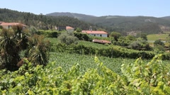 Portugese vineyard in the hills Stock Footage