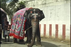 Elephants in India Festival Stock Footage