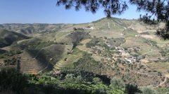 Portuguese vineyards in dramatic hill country Stock Footage