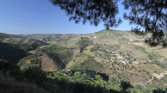 Port vineyards on a Portuguese hillside Stock Footage