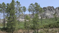 Pines and rocky hills Stock Footage