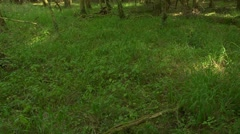 Pan left from a woodland floor to a fallen tree Stock Footage