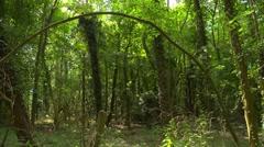 Looking through the wood 3, seamless loop Stock Footage