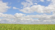 Stock Video Footage of Cloudy Green Field