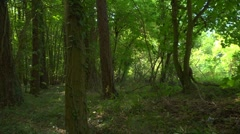 A deciduous forest, slow pan left, sunlight, dappled shade. Stock Footage