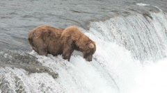 Stock Video Footage of Alaskan Brown bear near a waterfall