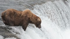 Alaskan Brown bear near a waterfall Stock Footage