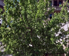 0117 Arbol PAL Stock Footage