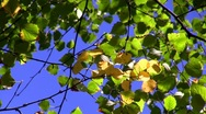 Colors of autumn, autumn leaves Stock Footage