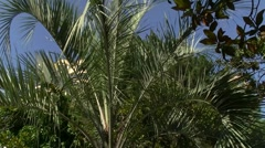 palm - stock footage
