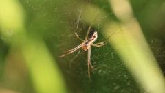 Spider Stock Footage