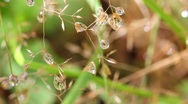 Water droplets on the grass. macro Stock Footage