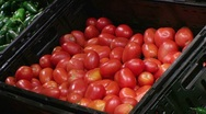 Woman Selecting Tomatoes In Produce Stock Footage