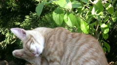 Little cats in the garden Stock Footage