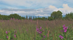 Wind Turbine over Blooming Fireweed Meadow Stock Footage