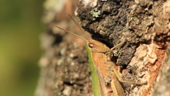 Grasshopper Stock Footage