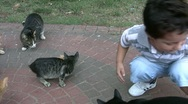 Little boy and little cats Stock Footage