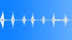 ANIMAL PIG TAMWORTH HAMISH GRUNT SEQUENCE12 - sound effect