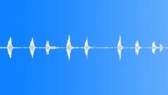 ANIMAL PIG TAMWORTH HAMISH GRUNT SEQUENCE14 Sound Effect