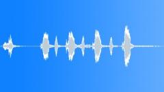 BIRD BROWN HONEY EATER CALL03 Sound Effect