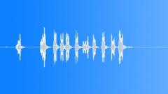 BIRD BROWN HONEY EATER CALL17 Sound Effect
