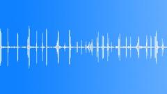BIRD TIT PAIR CALL SEQUENCE02 - sound effect