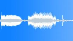 BIRDS IBIS AUSTRALIAN WHITE MIXED HONK06 Sound Effect