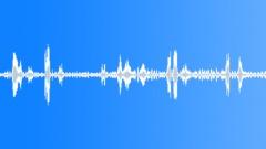 BIRDS IBIS AUSTRALIAN WHITE YOUNG MATURE NESTING01 Sound Effect