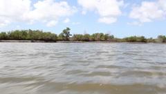 Brazilian Swamp - Mangue Stock Footage