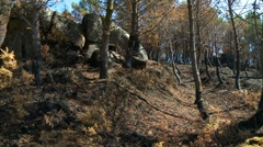 Forest fire burnt trees Stock Footage