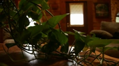 House Plant(HD)c Stock Footage